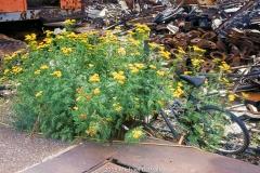 Bike in Flowers: Junk Yard