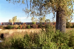 Train and Tree