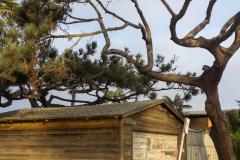 michael_prais_Ocean_Beach_-_Garage_and_Tree_Vertical