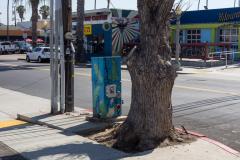 michael_prais_Ocean_Beach_-_Utility_Pole_and_Tree